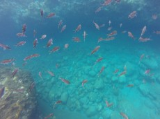 Just a few of the many fish we saw.