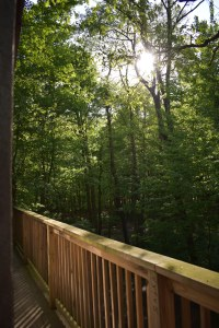 view of nature from the porch