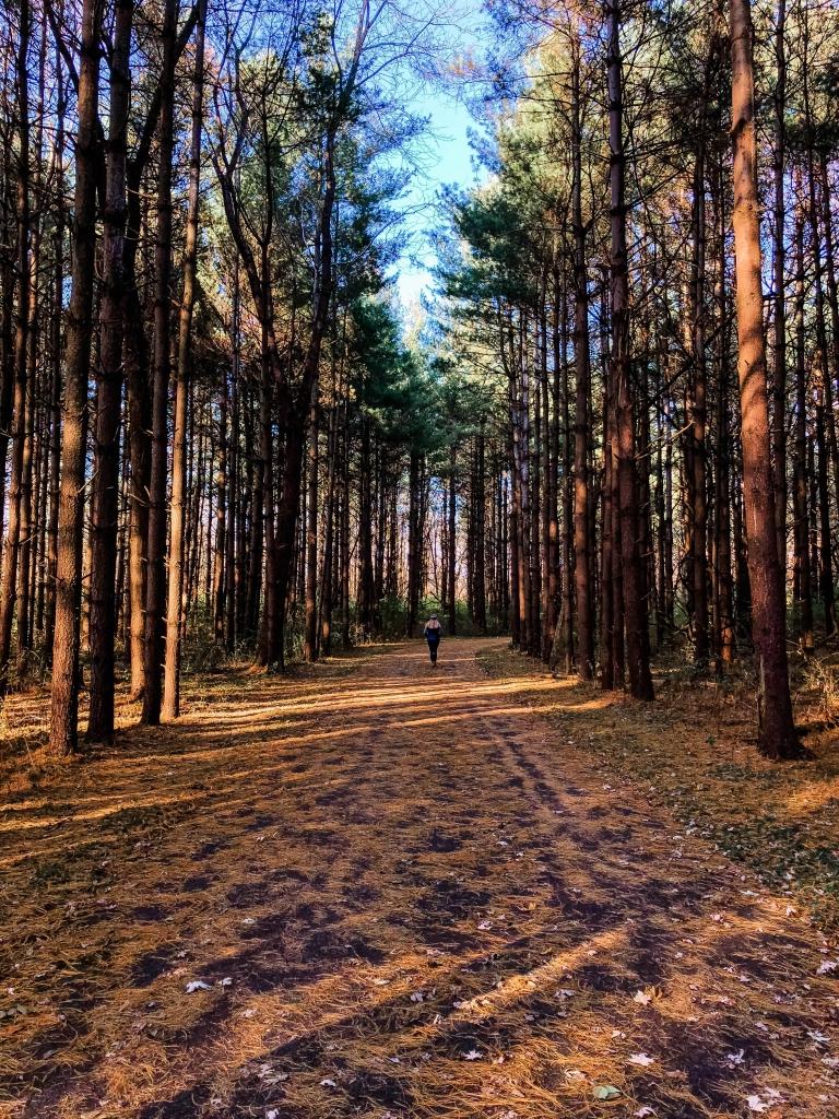 Walnut Woods Fall Trees